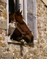 Cat and horse take a peek