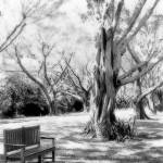 """Bench in BW"" by Cynthia_Burkhardt"