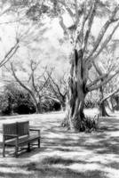 Bench in BW
