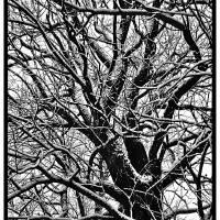 wood Art Prints & Posters by Serge Razumov