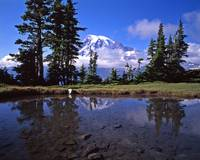 Mt Rainier Plummer Peak