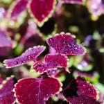 """Purple Water Beads"" by NateAllen"