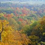 """Autumn Colors Blanket the Dundas Valley"" by DMHImages"