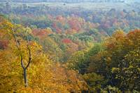 Autumn Colors Blanket the Dundas Valley