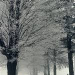 """A Foggy Lane A Cold Winter"