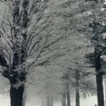 """A Foggy Lane A Cold Winter"