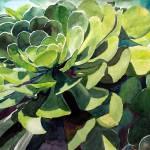 """Green Rose, K. Yaude"" by kyaudeart"