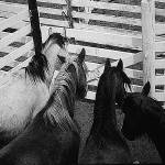 """Homage, ""Four Horsemen of the Apocalypse,"" 1921"" by davidleeguss"