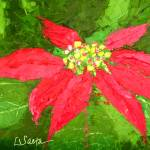 """Poinsettia"" by LeslieSaetaFineArt"