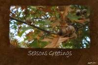 Jean Autumn Leaves 11 Seasons Greetings
