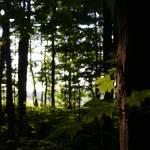 """""""forest"""" by erinlanzendorfer"""