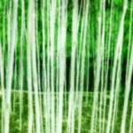 """China Grove neg green"" by LeslieTillmann"