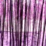 """China Grove purple"" by LeslieTillmann"