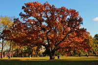 Fall Fire Tree