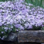 """""""Flowers"""" by parksdekle"""