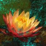 """Water Lily"" by barbarayoungleson"