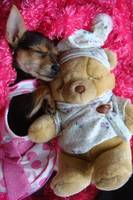 Sleeping with Teddy