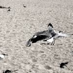 """Wake Up! Predators On The Beach"" by madeline"