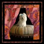 """""""Chloe on her tuffet with drapes"""" by madeline"""