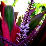 """Thai Plants"" by AustinsPhotos"