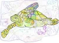 Sea TurtleColor