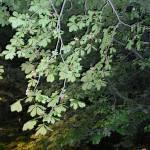 """Sleeping Leaves"" by andrianapamella"