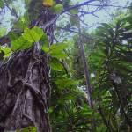 """Rainforest in Paradise"" by LorrieMorrison"