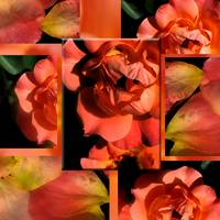 Orange Rose Petal Collage