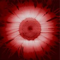 Daisy Round Red