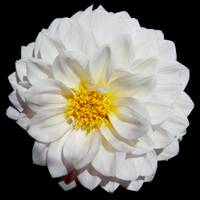 Perfect White Flower
