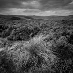 """Wet Withens, Eyam Moor"" by AndyStafford"