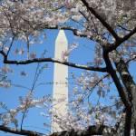 """Washington D.C."" by Klookhart"