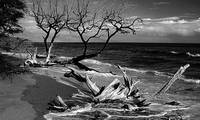 Black and White Driftwood Fine Art Print