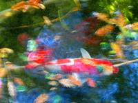 Abstract Koi 1