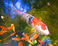 Abstract Koi 2