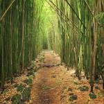 """Bamboo Forest"" by Inge-Johnsson"
