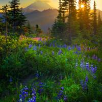 """Mount Rainier Sunburst"" by Inge-Johnsson"