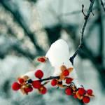 """""""Frozen berries"""" by FScala"""