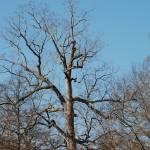 """winter tree 1"" by imagineit"