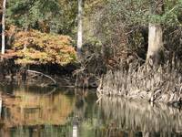 Chipola River Fall 045