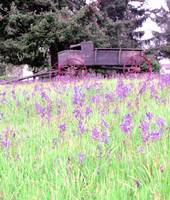 wagon_wildflowers2
