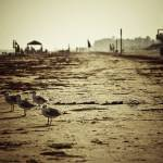 """jamaica beach, galveston"" by msawyerphotography"