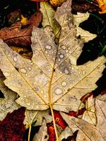 Autumn leave splashed with drops
