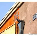 """Bird on Orange Wall"" by grahamsale"