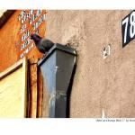 """Bird on Orange Wall 2"" by grahamsale"