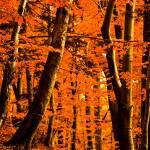 """""""Autumn walk"""" by urosmm"""