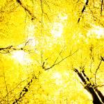 """""""Yellow autumn"""" by urosmm"""
