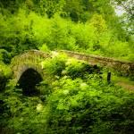 """""""Bridge"""" by urosmm"""