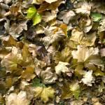 """""""Fallen leaves"""" by RobertKovacs"""