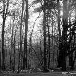 """The Woods"" by BGTPhotography"